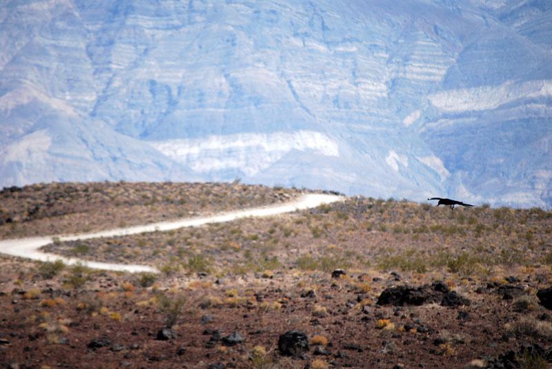En pocas ocasiones se puede ver algún ser vivo en el Valle ©El Viajar es un Placer