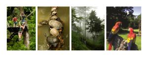 Centroamérica y sus selvas: naturaleza y biodiversidad en estado puro