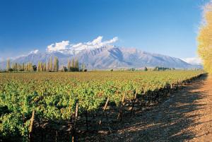 El sabor y la variedad de los viñedos de Chile