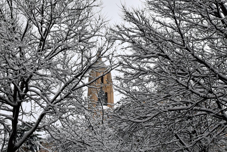 Una vista de la torre de la Catedral, entre las ramas.©El Viajar es un Placer