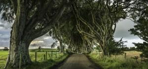 Árboles de Dark Hedges, el camino de Juego de Tronos en Irlanda, son reciclados como puertas