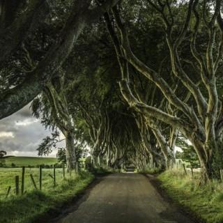 Camino Real en Irlanda