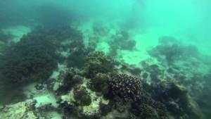 Buscando a Nemo buceando en las Islas Filipinas