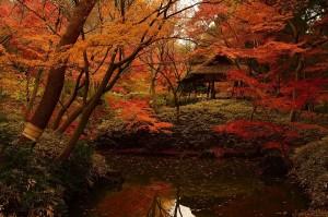 Danzas tradicionales, castañas y concursos de hortalizas para dar la bienvenida al otoño en Tokio