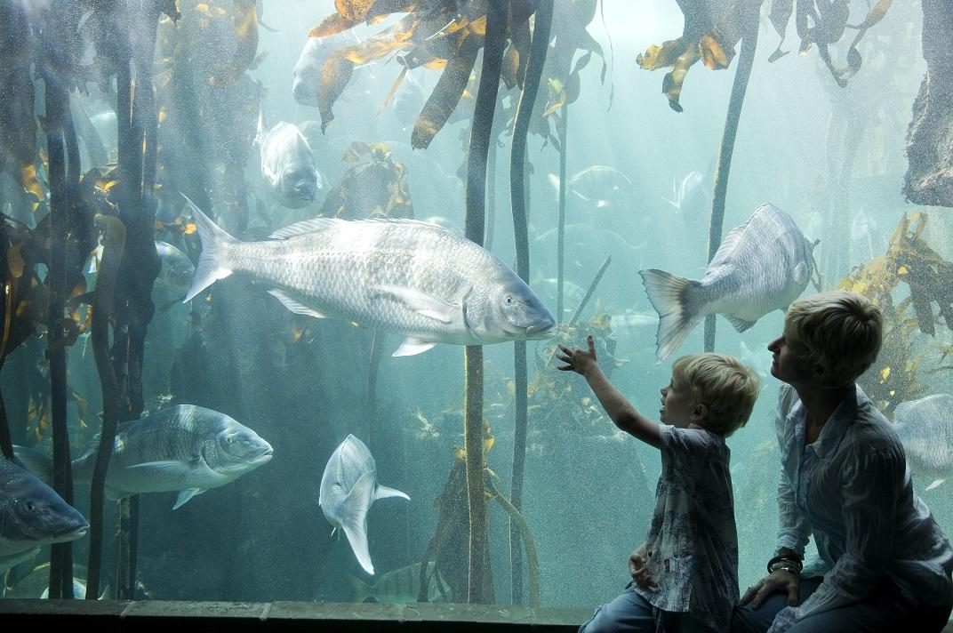 Sud frica un pa s para disfrutar en familia el viajar Aquarium familia numerosa